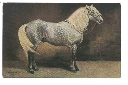 Vintage Germany PERCHERON horse postcard RARE