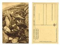 WWI Serbia v Bulgaria soldiers death postcard