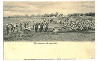 1900 Bulgaria Army Shooting practice postcard